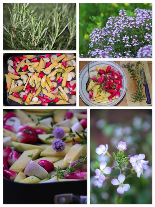Legumes racines